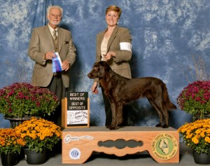 Caris 2nd pt 2014001 - Flat-Coated Retrievers and Conformation