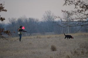 Caris tracking Penfield March 2013 - Flat-Coated Retrievers and Versatility