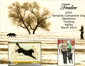 Tralee VCD1 - Flat-Coated Retrievers and Versatility