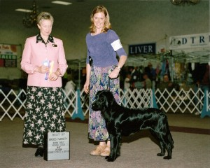 Tralee's 1st Pt0001 - Flat-Coated Retrievers and Conformation